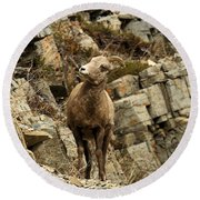 Big Horn On The Rocks Round Beach Towel