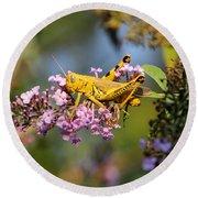 Big Yellow Grasshopper Round Beach Towel