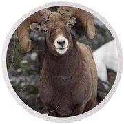 Bighorn Sheep, Maligne Canyon, Jasper Round Beach Towel