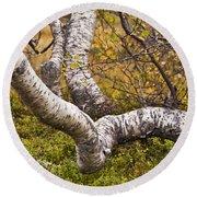 Birch Trees In Autumn Foliage Round Beach Towel