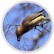 Bird - Cedar Waxwing - One At A Time Round Beach Towel