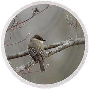 Bird - Eastern Phoebe - Very Contented Round Beach Towel