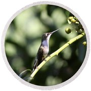 Bird - Hummingbird - The Observer Round Beach Towel