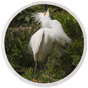 Bird Mating Display - Snowy Egret  Round Beach Towel