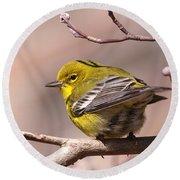 Bird - Pine Warbler - Detail Round Beach Towel