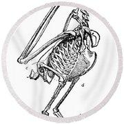Bird Skeleton Round Beach Towel
