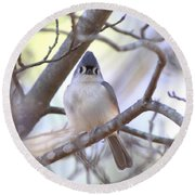 Bird - Tufted Titmouse - Busted Round Beach Towel
