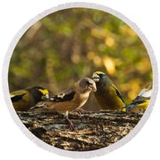 Birds Of Yellow Round Beach Towel