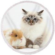 Birman Cat And Frizzy Guinea Pig Round Beach Towel