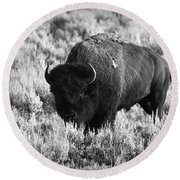 Bison In Black And White Round Beach Towel