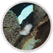 Black And White Anemone Fish Looking Round Beach Towel by Mathieu Meur