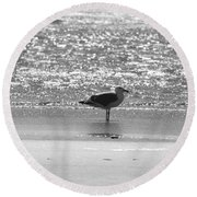 Black And White Gull Round Beach Towel
