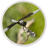 Black And White Widow Skimmer Dragonfly Round Beach Towel