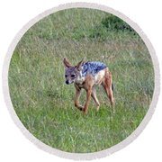 Black Backed Jackal Round Beach Towel