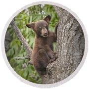 Black Bear Cub Hanging On Round Beach Towel