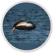 Black-belled Whistling-duck In Flight Round Beach Towel