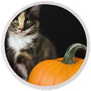 Black Calico Kitten With Pumpkin Round Beach Towel