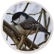 Black Capped Chick Round Beach Towel