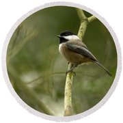 Black-capped Chickadee With Branch Bokeh Round Beach Towel
