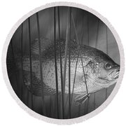 Black Crappie Or Speckled Bass Among The Reeds Round Beach Towel
