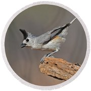 Black Crested Titmouse Round Beach Towel