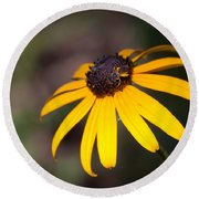 Black Eyed Susan With Young Bee Round Beach Towel