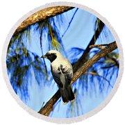 Black Faced Cuckoo Shrike V3 Round Beach Towel