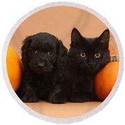 Black Kitten & Puppy With Pumpkins Round Beach Towel