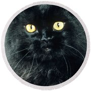 Black Persian Cat Round Beach Towel
