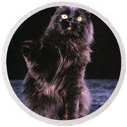 Black Persian Cat Reaches Round Beach Towel