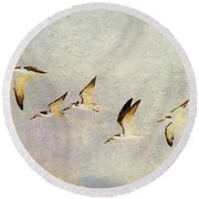 Black Skimmers On The Move Round Beach Towel