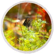 Black Swallow Tail Butterfly In Autumn Colors Round Beach Towel