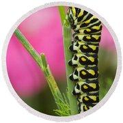 Black Swallowtail Caterpillar On Garden Round Beach Towel