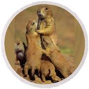 Black-tailed Prairie Dogs Round Beach Towel
