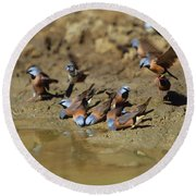 Black-throated Finches At Waterhole Round Beach Towel