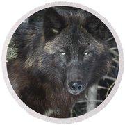 Black Timber Wolf Round Beach Towel
