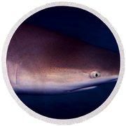 Black Tip Reef Shark Round Beach Towel