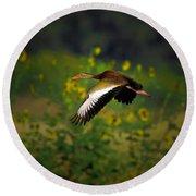 Blackbellied Whistling Duck In Flight Round Beach Towel