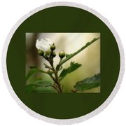 Blackberry Vine Flower Round Beach Towel