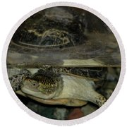 Blandings Swimming Turtle Round Beach Towel