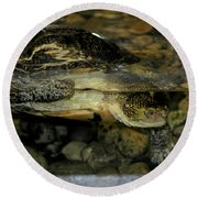 Blandings Turtle Round Beach Towel