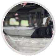 Blonde And Black Dogs Round Beach Towel