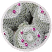 Blooming Cactus Round Beach Towel