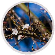 Blooming Tree With White Flowers Round Beach Towel