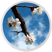 Blossoming Apricot Round Beach Towel