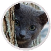 Russian Blue,cat  Round Beach Towel