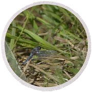 Blue Corporal Dragonfly Round Beach Towel
