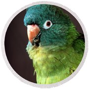Blue Crowned Conure Round Beach Towel