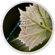 Blue Damsel On Leaf Round Beach Towel