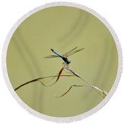 Blue Dasher Dragonfly Round Beach Towel